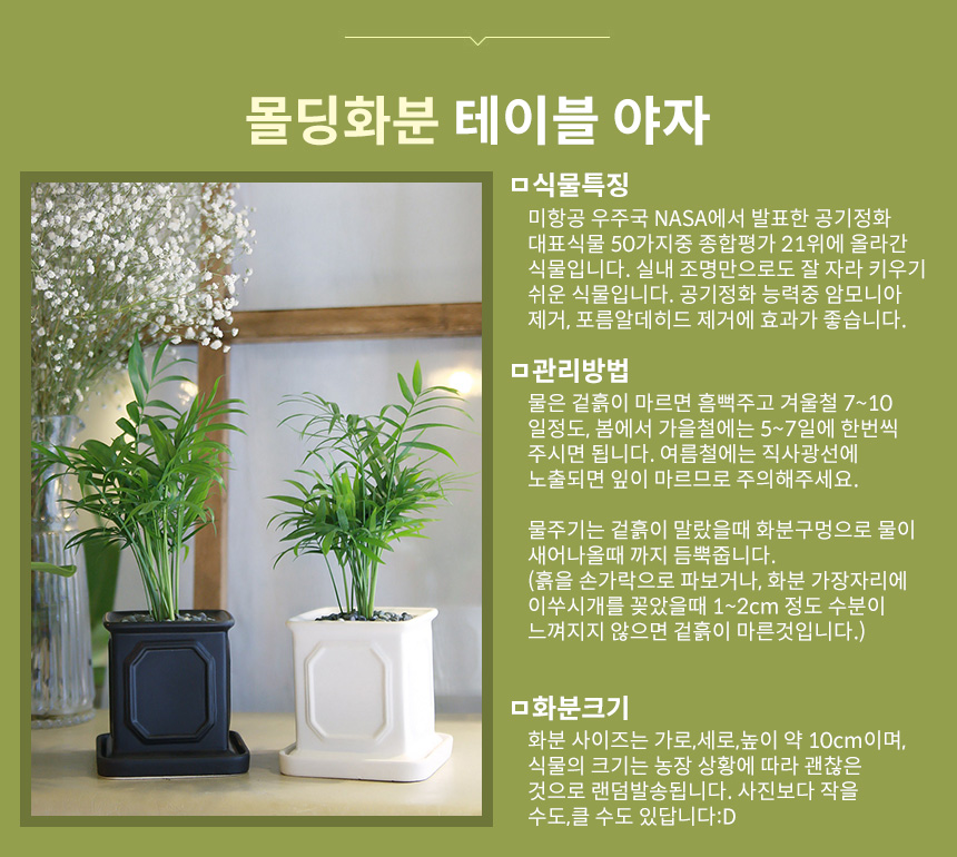 몰딩 화분 모음전 공기정화식물 14종 - 나인플랜트, 15,600원, 플라워(생화), 화분세트