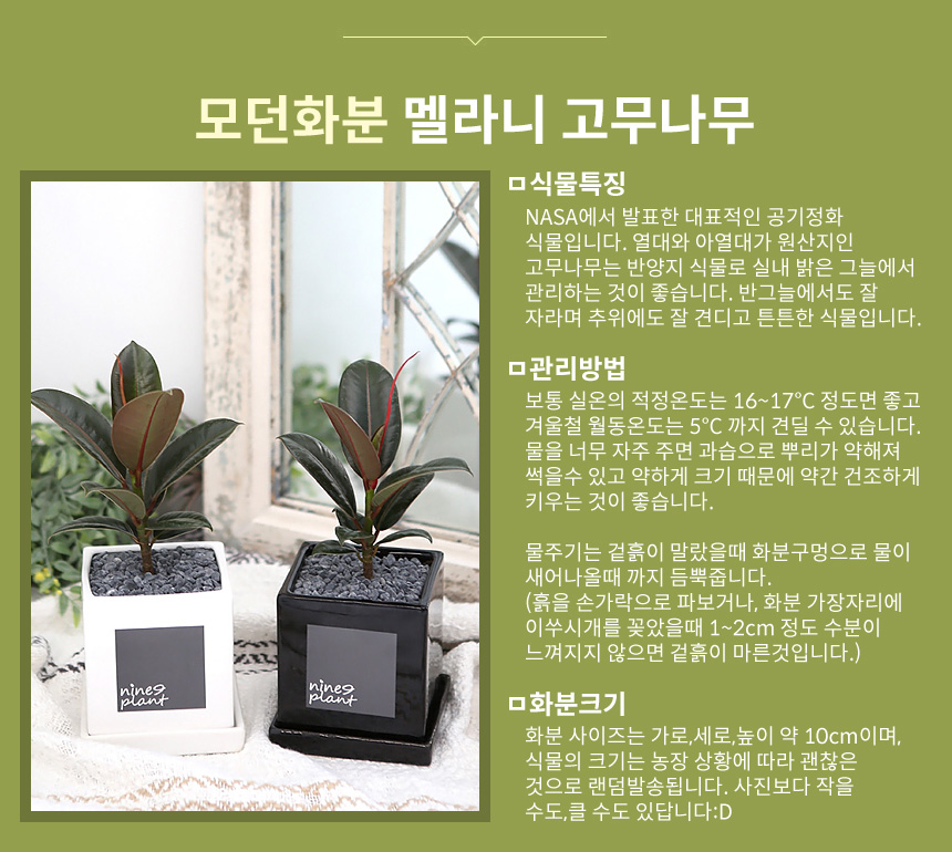 모던 화분 모음 실내공기정화식물 15종 - 나인플랜트, 13,300원, 플라워(생화), 화분세트