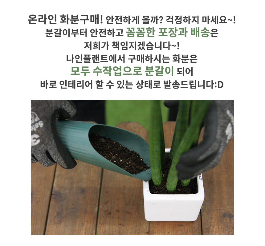 엔틱 화분 모음 실내공기정화식물 12종 - 나인플랜트, 11,300원, 플라워(생화), 화분세트