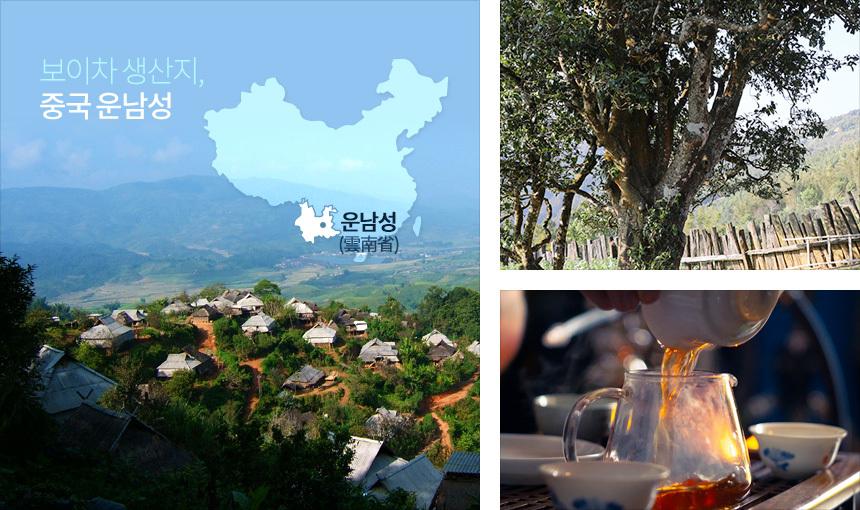중국 운남성 보이차 - 차예마을