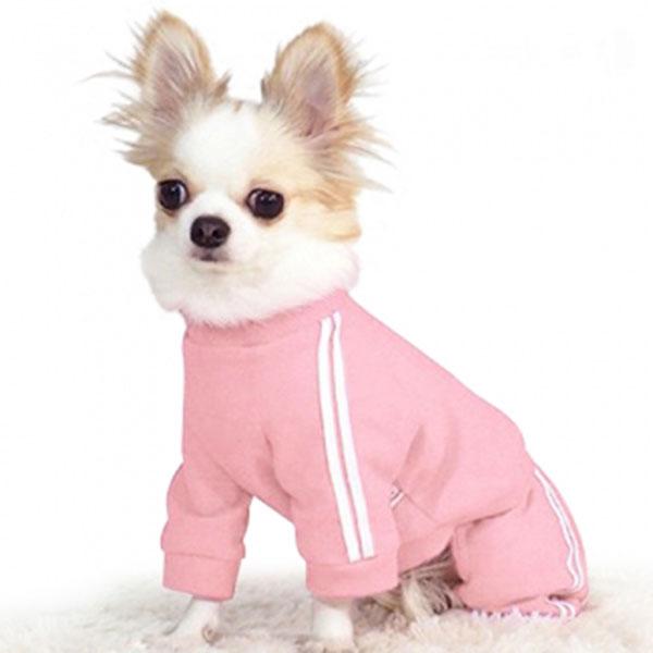 도그포즈 취준생 핑크