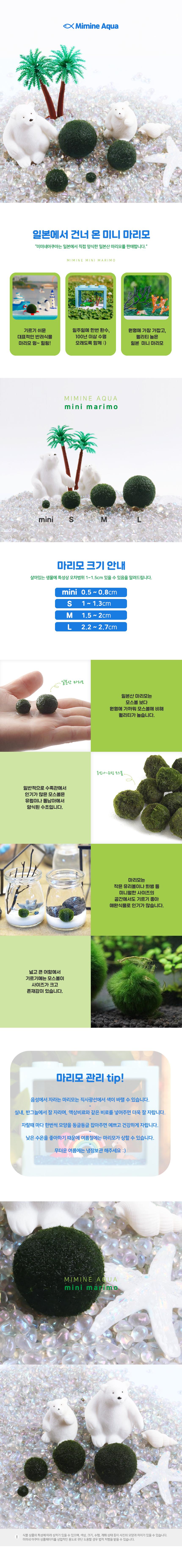 일본 미니 마리모 (S) x 2개 - 미미네아쿠아, 2,000원, 키우기, 식물