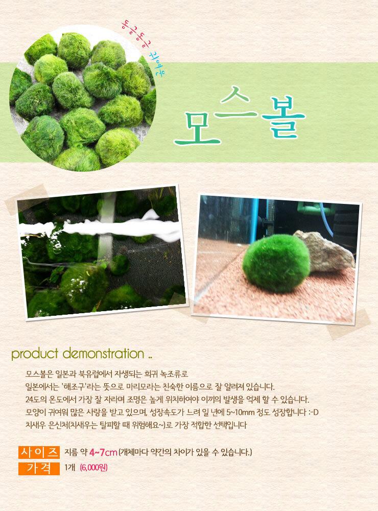 모스볼 (5~8cm) - (마리모 어항수초) - 미미네아쿠아, 6,000원, 키우기, 식물