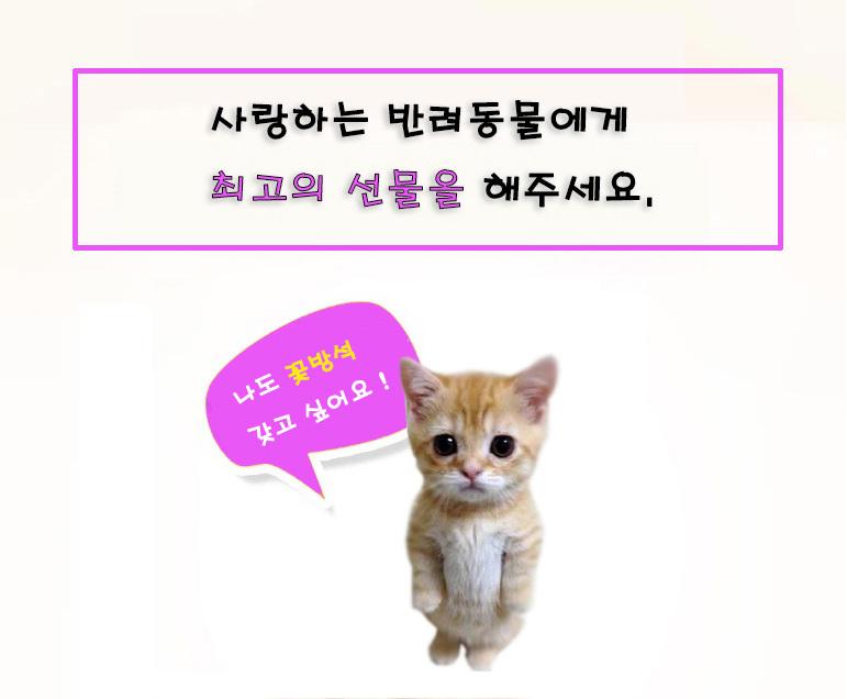 강아지 방석 집 쿠션 고양이집 개집 하우스 꽃방석 - 펫블라썸, 19,800원, 하우스/식기/실내용품, 방석/매트