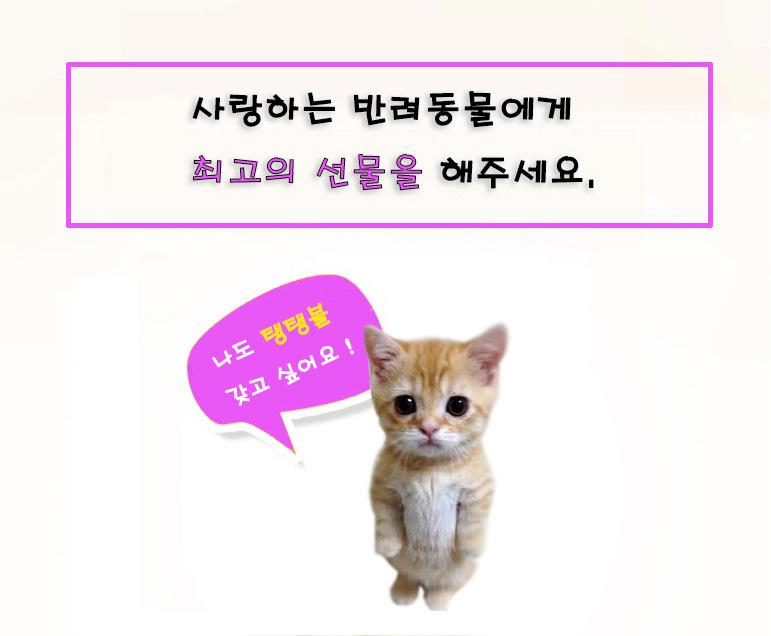 강아지 대형견 장난감 고양이 공 치석 제거 사운드 탱탱볼 - 펫블라썸, 4,900원, 장난감/훈련용품, 장난감
